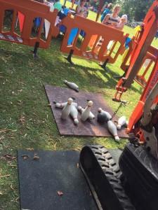 6 mini digger parties